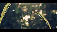 Najwa Latif - AdaMu - Official Music Video - YouTube.MP4